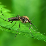 Stoko anti inseсt - защита от комаров и клещей